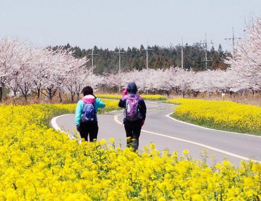 Điểm danh 3 lễ hội đặc sắc nhất ở Jeju