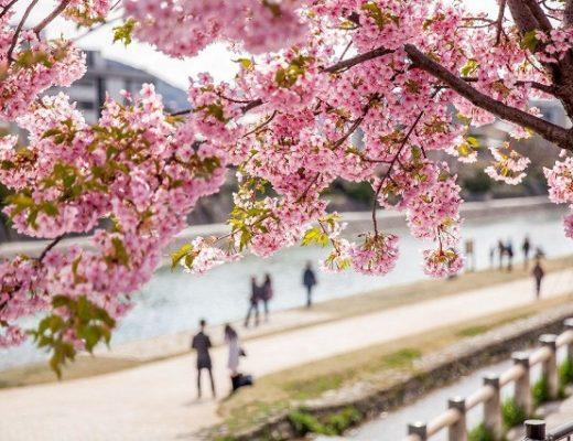 4 mùa hoa tuyệt đẹp của xứ sở hoa anh đào