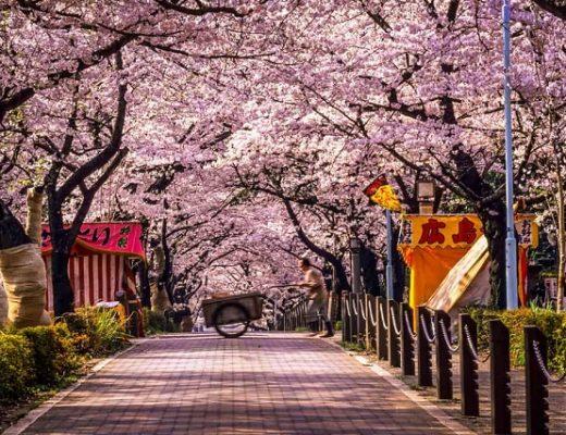 Khám phá nét đẹp đa chiều của thủ đô Tokyo