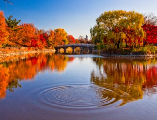 Top 3 điểm tham quan hấp dẫn vào mùa thu ở Daegu