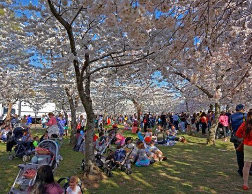 Những lễ hội mùa xuân nổi tiếng ở thủ đô Washington DC
