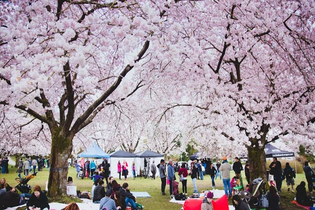 Tham gia các lễ hội truyền thống đặc sắc nhất ở Vancouver